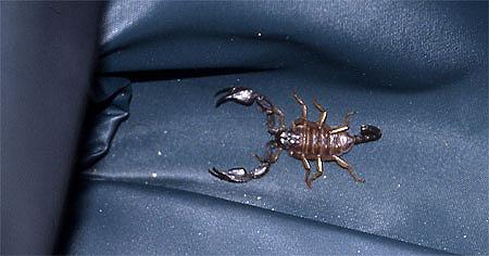 755-24-skorpionkoffera450.jpg
