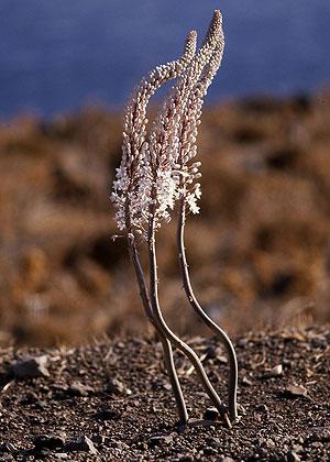271-13-weissepflanze300.jpg