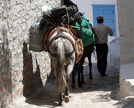 Hydra Esel Muli mit Gepäck