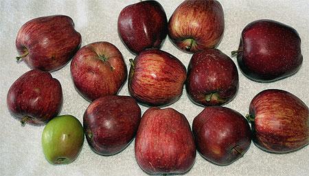 Milies Äpfel