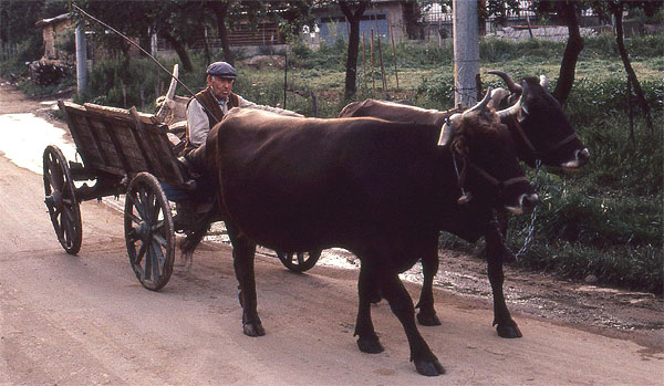 Turija Ochsenkarre