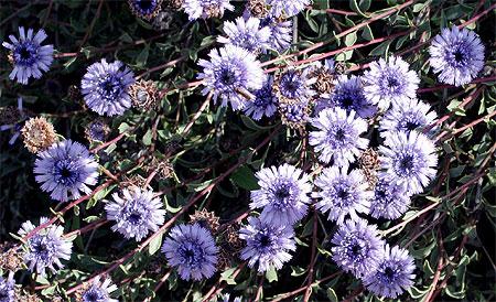Spetses Winter Flora