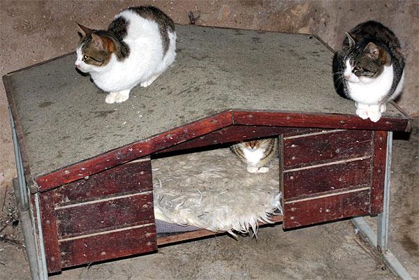 Arkadi Katzen