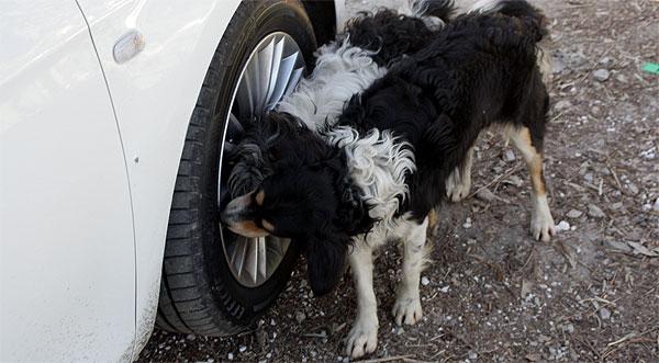 Hundebotschaft am Auto