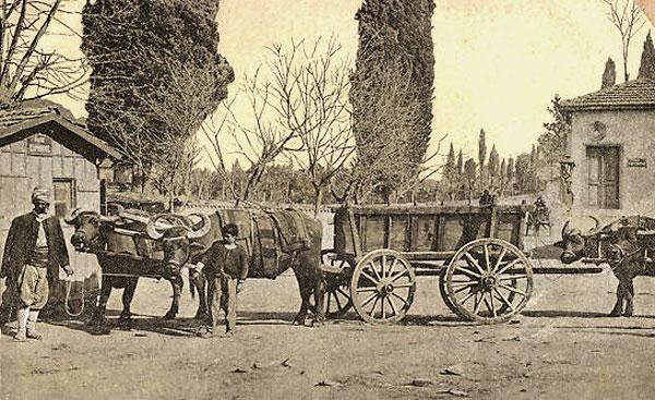 600_Saloniki-Bueffelwagen